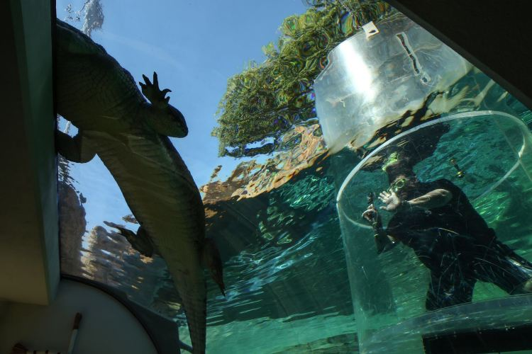 Crocosaurus Cove3