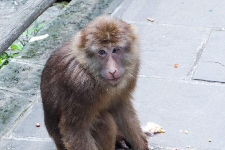 Mt. Emei Natural Ecology Monkey Reserve2