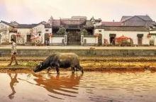 赏雪景、品美食、寻年味…就去浙9个最适合冬日撒欢的古村镇!