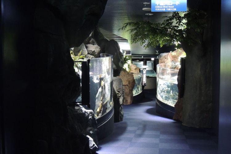 Chitose Salmon Aquarium2