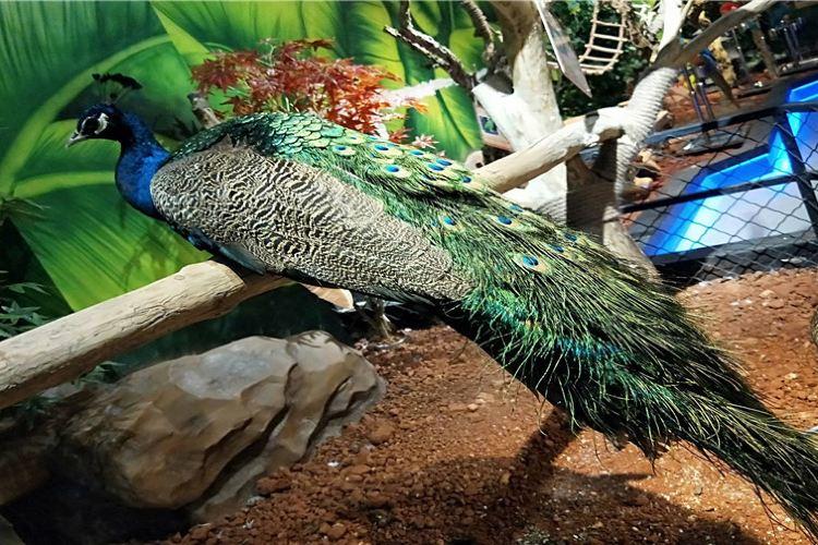 奇幻王國室內動物園3