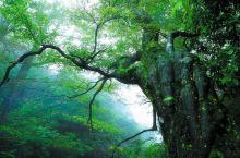新化秘境,大熊山这片森林,为你承包了!!!