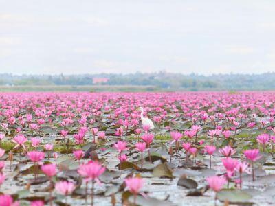 Talay Bua Dang (Red Lotus Lake)