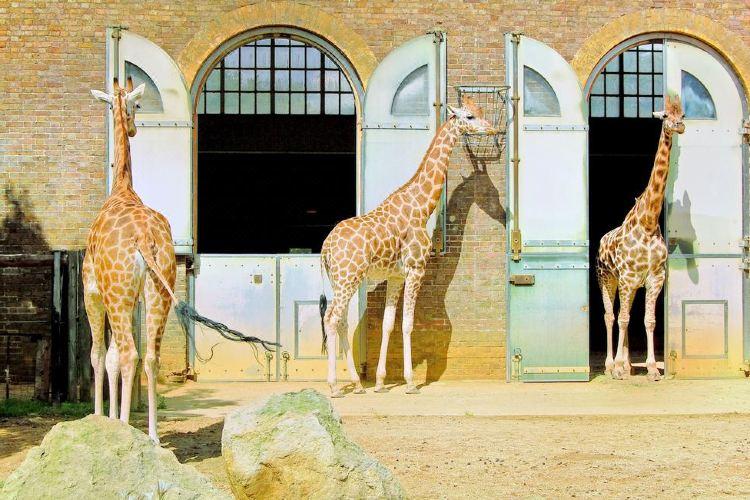 런던 동물원