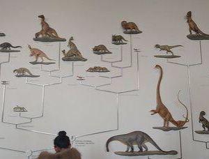 南特自然历史博物馆旅游景点攻略图