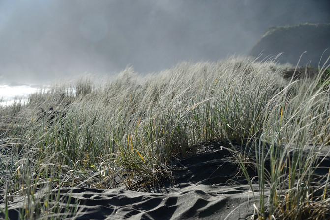 秋天的步道——奥克兰周边Te Henga Walkway – 新西兰游记攻略插图16