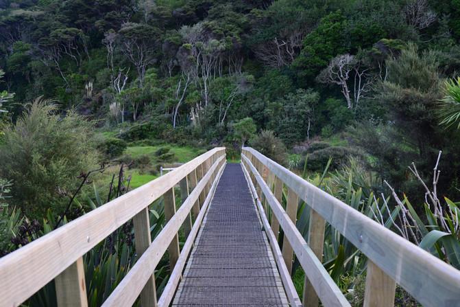 秋天的步道——奥克兰周边Te Henga Walkway – 新西兰游记攻略插图7