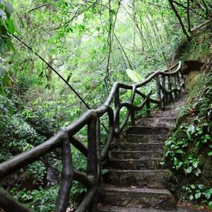来宾游记图文-隐居山林中,金秀峻岭觅瑰宝