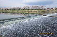 [2018年4月][仙台东京之旅]大河原町:白石川畔一目千本樱