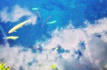 忍野八海-一个神奇的地方