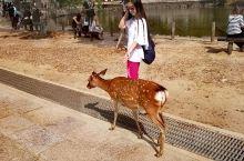 奈良公园,东大寺