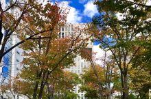 都市中的秋韵