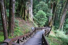 领略别样的阿里山风情,这8条自然步道了解一下
