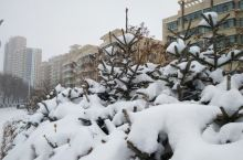 春季到青海来着雪!
