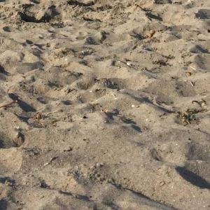 阿尔凯沙滩旅游景点攻略图