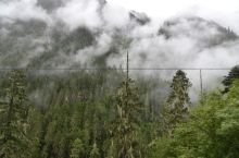 波密,森林王国
