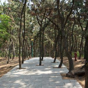 林海公园旅游景点攻略图