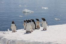 大自然的行为艺术-南极洲的精灵2