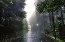 寂静林一般的雾岛