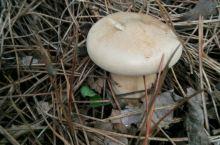 去黄龙采蘑菇
