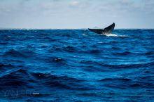 如何在斯里兰卡邂逅海洋巨人,请收好这份观鲸攻略
