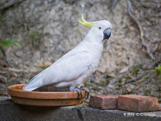 庫蘭達雀鳥世界
