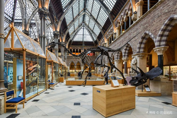 Oxford University Museum of Natural History1