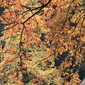 白岩寺旅游景点攻略图