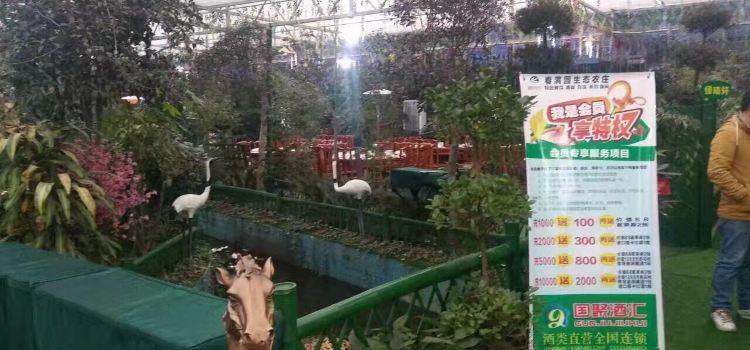 春滿園生態農莊3
