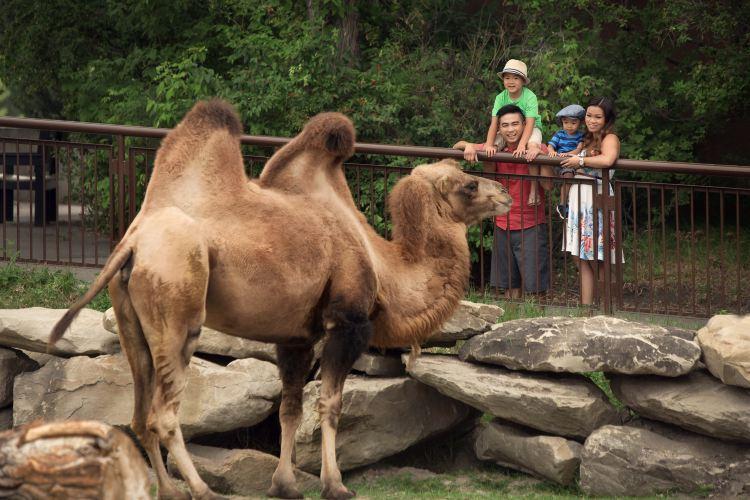 Calgary Zoo1