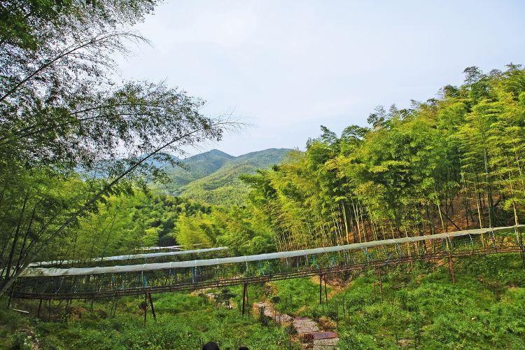 저둥대나무관광지4