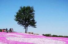200000㎡的粉色花海,开园便成为长三角梦幻花海打卡圣地,杭州自驾只需3h!