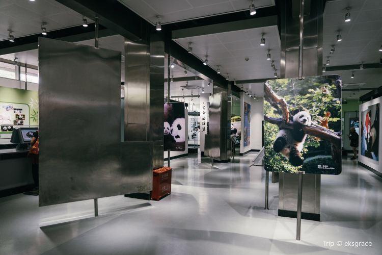 成都パンダエコパーク観光博物館1
