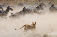马赛马拉:圆你《动物世界》种下的非洲梦