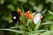 中国最大的蝴蝶放飞园