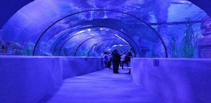 Shijiazhuang Zoo Aquarium1