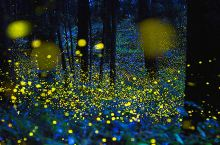 沙巴知名红树林测评,带你跟萤火虫来次浪漫的约会!