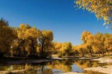 千万别和额济纳旗的秋天比美,它能颠覆你的想象!
