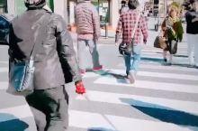 #元旦去哪玩 伊势的大街上遇上太有个性的柴犬
