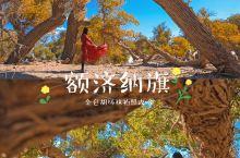 国内风光额济纳旗|国内最美的金色的胡杨林攻略
