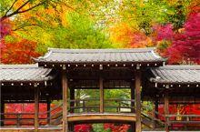在缓慢的时间里,探寻古京都的美好