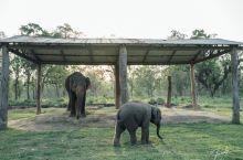 在EBC大象孵化中心跟小象玩一玩 #向往的生活