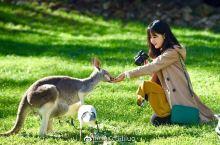 澳大利亚,和袋鼠一起玩耍