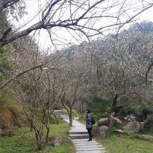 新兴天露山旅游度假区旅游景点攻略图