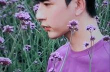 寻一片紫色花海,期待奇迹