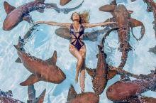 巴哈马景点这个地方居然能和鲨鱼一起游泳,玩的简直就是心跳!