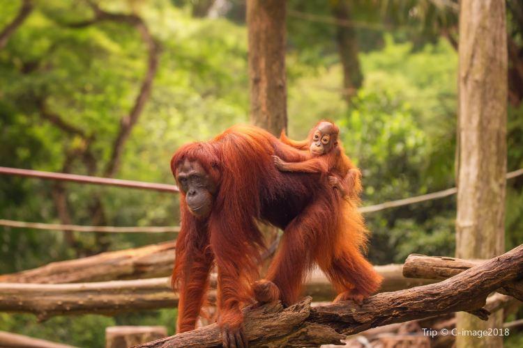 Singapore Zoo1