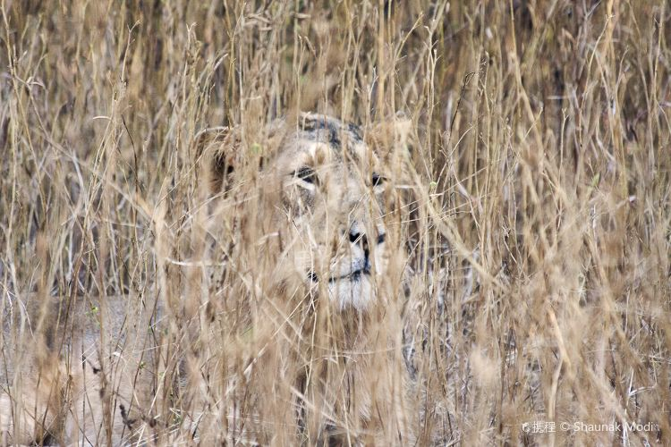 Gir National Park and Wildlife Sanctuary2
