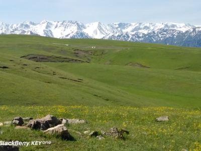 吐爾加遼草原