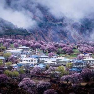 嘎拉桃花村旅游景点攻略图